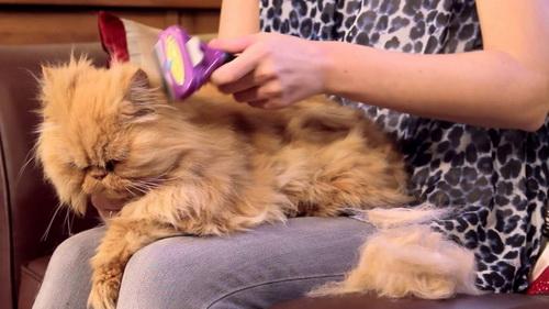 Применение фурминатора для кошек