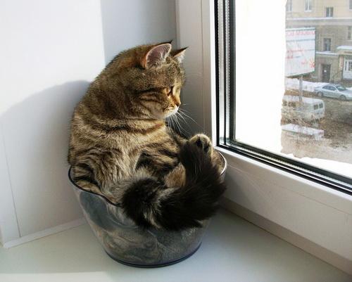 Можно ли оставить кота на два дня одного