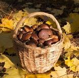 Где и когда можно собирать грибы