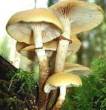Как проверить грибы