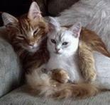 Кот или кошка: кто лучше