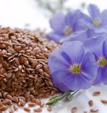 Польза семян льна